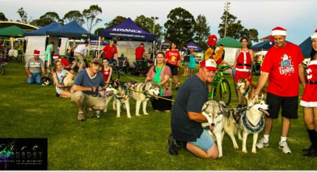 The Annual Santa Pull at Dogs NSW Christmas Show