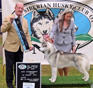 Australian Bred in Show Ch Suthanlites Tribute