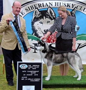 Opposite Australian Bred in Show Ch Taejaan Storm Ina Teacup